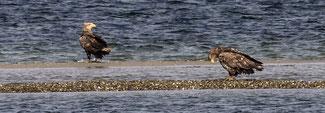Foto von Vögeln auf der Halbinsel Holnis