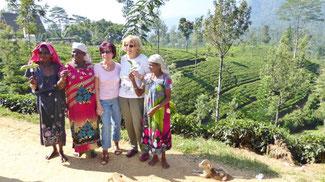 Bild: Teepflückerinnen in Sri Lanka