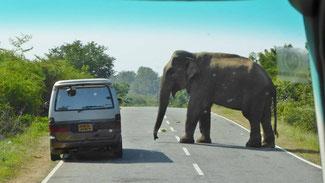 Bild: Elefant auf der Straße begrüßt den Autofahrer