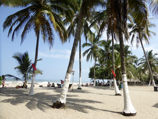 Bild: Der Strand von Palomino
