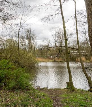 """Bild: Das Stadtseegelände erinnert an die großen Wasserflächen der Eider vor dem Absenken des Wasserspiegels durch den Bau des Kanals. Schilder erklären die hier gepflanzten """"Bäume des Jahres""""."""