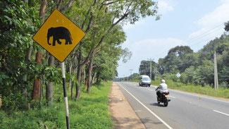 Bild: Verkehrsschild mit einem Elefanten in Sri Lanka