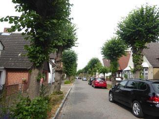 Bild: Die mit Linden gesamte Lange Straße in der kleinsten Stadt Deutschlands Arnis