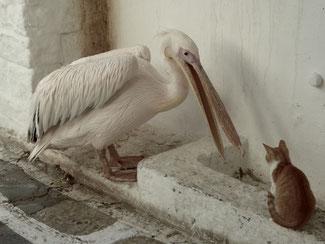 Bild: Pelikan mit Katze