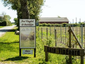 Das dänische Weingut Brummers Gard auf Årø