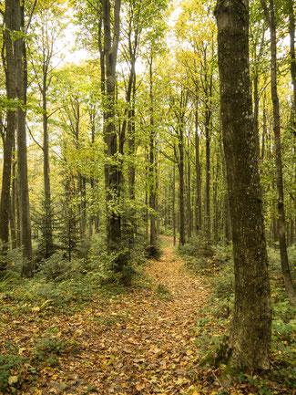 Bild: Herbstwald in Polen