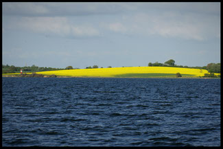 Dänemark Rapsfelder Dänische Südsee Pegasus Segeln Mai Frühling