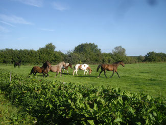 ferme equestre de preney (Morvan)