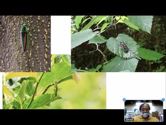 長谷川さんのプレゼンはビジュアルでわかりやすかったですね。こんな美しい昆虫が山の中に潜んでいるとは…