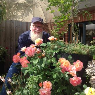 Augusta Luise ® Gartenbotschafter John Langley® in Husum