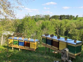 Bienenkästen mit verschiedenen Standölfarben gestrichen.