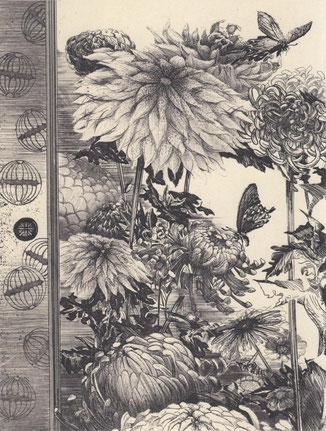 菊に麝香揚羽/銅版/雁皮刷り 20×15.5cm