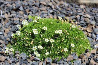 Bepflanzung Beet Beete Blumenbeet Rasenmähen Stauden schneiden Bäume fällen Hecken schneiden entsorgen Staudenschnitt Blumen Stauden Büsche Pflege Rassenmähen