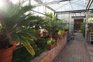 Pflanzen Winter Unterbringen Überwinterung Gewächshaus Warm