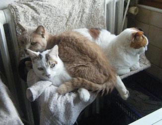 Eh oui c'est moi en dessous! Les places près du radiateur sont très demandées!