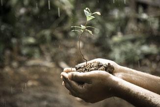 Zwei Hände halten Erde und daraus wächst neue Pflanze