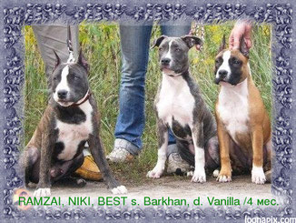 puppies from BARKHAN & VANNILA Sky From Royal Court Yard