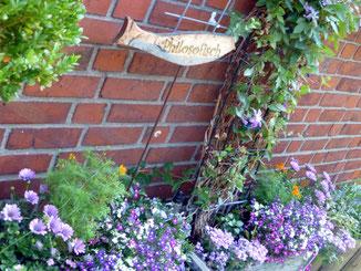 Kästen am Haus: Nemesien, Bornholm, Verbenen, Tagetes, Lobelien