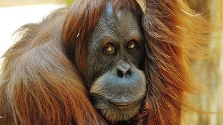 Palmöl - Gier mit verheerenden Folgen - fair4world