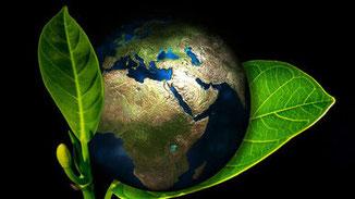 CO2-armes Essen für's Klima