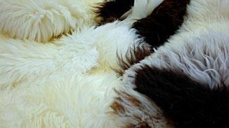 Tierische Mode - Blutige Mode - Schafs- und Lammfelle - fairani