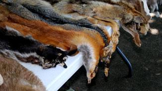 Tierische Mode - Blutige Mode - Tierfelle für Pelzproduktion- fairani