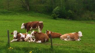 Molkerei Berchtesgadener Land erteilt Glyphosatverbot