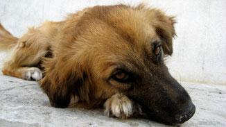 Tierische Mode - Blutige Mode - Süßer Hund - Mein Pelz gehört mir! - fairani