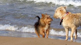 Tipps zur richtigen Hundehaltung
