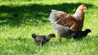 Ostern - das Leiden der Tiere
