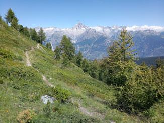 Trail auf der Varneralp am Tag 2 der Wallis-Tour