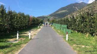 vorbei an unzähligen Apfelplantagen