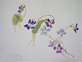 スミレ  Violets (Watercolor painting)
