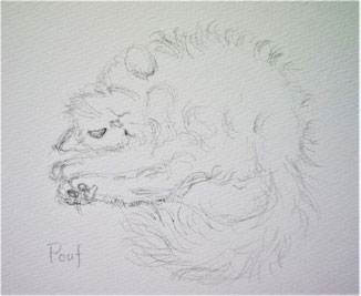 cat, drawing