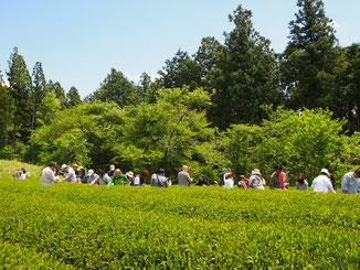川根(静岡県)の有機栽培茶 樽脇園 浅蒸し茶 無農薬 無化学肥料 オーガニック 山のお茶 水出し オーガニック川根茶フェス2018
