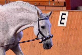 Pferd, Longe, Kappzaum, Dehnungshaltung, Legerete, Philippe Karl