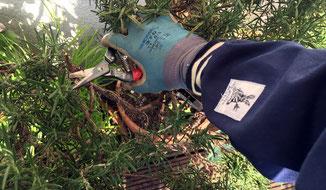 So gut wie Rosenhandschuhe - Ärmelinge sind der ideale Schutz der Unterarme bei der Gartenarbeit. Bei www.the-golden-rabbit.de