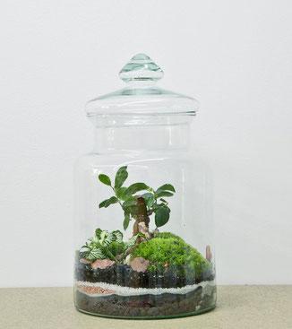 GreenLab des Pariser Ateliers GreenFactory: Prairie medium ist ein mittelgroßes Glashaus mit einem Ficus microcarpa. www.the-golden-rabbit.dees