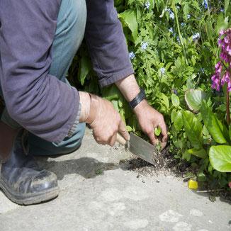 Spitze eines Sauzahns - einem Tiefengrubber der für die Bodenbelüftung eingesetzt wird. Perfekt ausgeführt von der Gartengeräte Manufaktur Sneeboer