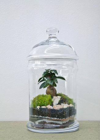 Dome Ficus - ein wunderschönes GreenLab von Green Factory Paris, jetzt in Deutschland bei the-golden-rabbit