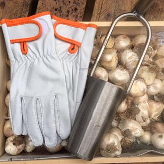 """Der """"Contact - R"""" vom französichen Handschuhspezialisten Rostaing  ist ein wunderbar verarbeiteter, weicher Lammlederhandschuh für die Gartenarbeit von www.the-golden-rabbit.de"""