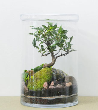 "GreenLab ""Garden XL / Bonsai 5 ans"" von dem Pariser Atelier Green Factory. www-the-golden-rabbit.de"