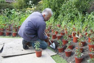 Der Headgardener von Great Dixter zeigt wie man mit dem Sneeboer Great Dixter Staudenspaten arbeitet. / englische Gartengeräte / Der Spaten ist perfekt für urban Gardening