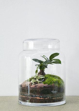 Glashaus mit kleinem Ökosystem von dem Pariser Atelier Green Factory - hier das GreenLab Flat medium