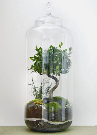 "GreenLab ""Giant Lab / Bonsai 8 ans"" von dem Pariser Atelier Green Factory. www-the-golden-rabbit.de"