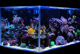 Tropisches Meerwasseraquarium Salzwasseraquarium mit Korallen