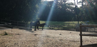 Sieste en agréable compagnie au soleil levant.