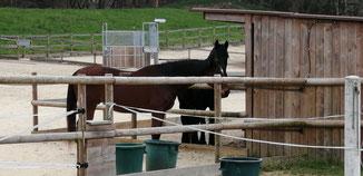 L'amitié, ça s'entretient. Alors Briar va souvent voir Black toujours dans le paddock d'intégration.