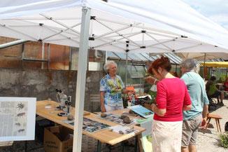 Infostand der Bunten Wiese auf auf dem Bienentag in der Gärtnerei Jantzen
