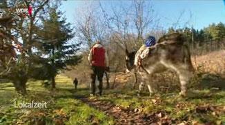 Lokalzeit-Koeln-Eselwanderung-bongard-petra-landsberg-eifel